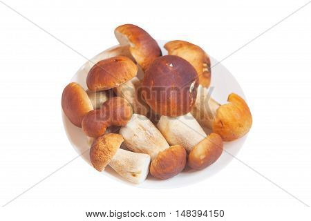 Edible  Mushrooms Porcini On A White Background