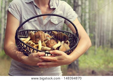 Mushroomer holds a wicker basket with mushroom on the forest background blur / picking crops in the open air