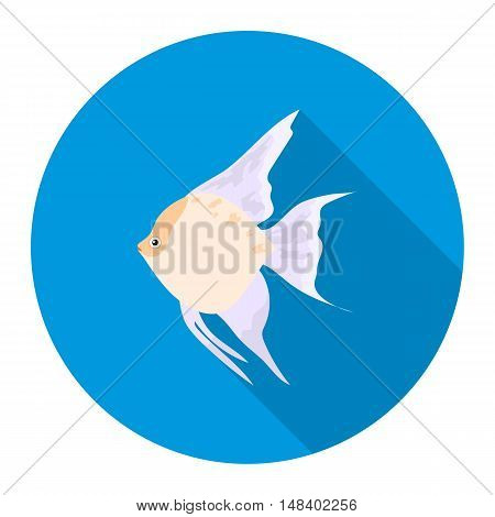 Angelfish common fish icon flat. Singe aquarium fish icon from the sea, ocean life flat.