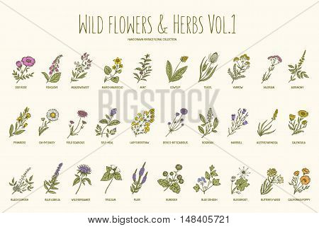 poster of Wild flowers and herbs hand drawn set. Volume 1. Botany. Vintage flowers. Vector illustration in the style of engravings.