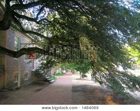 Walk Under The Tree