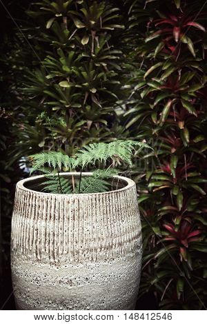 Potted plant against dark green wall. Fern in a big ceramic pot next to hedge with copy space