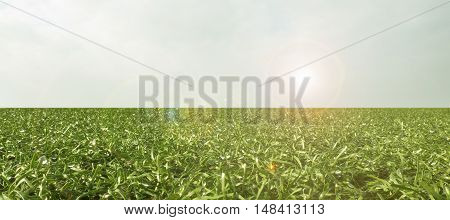 Abstract green field with a flare from the sun.