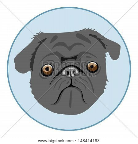 Digital vector pug dog face, in blue circle, flat style