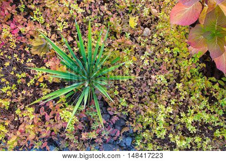 Green plant in the autumn garden. View from above. The natural texture of the leaves. Landscaping in the garden.
