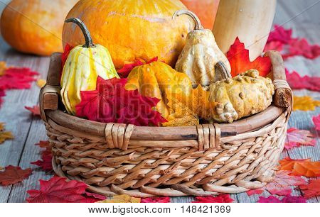 Basket of assorted, organic pumpkins on wooden table