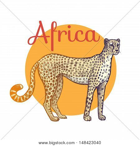 African animals. Cheetah. Illustration Vector Art. Style Vintage engraving. Hand drawing.