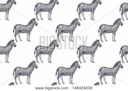 Old engraving zebras. Vector illustration seamless pattern. White and black. African animals.