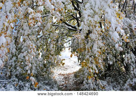 Beautiful colorful frozen foliage in the autumn. First autumn snow. Bieszczady