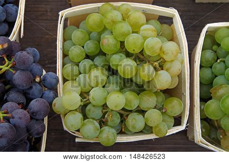 Bunches of green wine grapes displayed in baskets for market