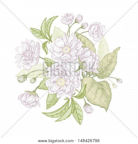 Plum flower. Vector bouquet. Blooming branches of a tree on a white background.