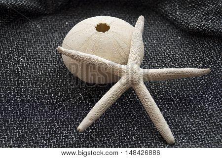 Starfish and sea urchin skeleton on a black background. Postcard marine theme.