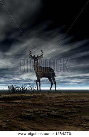 Hirsch (Buck)