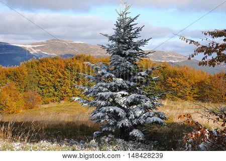 A beautiful autumn mountain landscape. Bieszczady mountains.