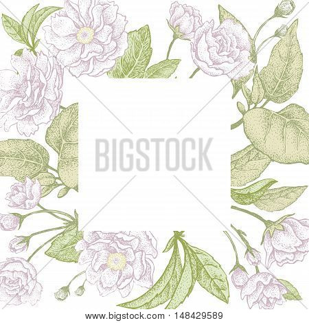 Plum flower. Vector illustration card. Blooming branches of a tree on a white background.