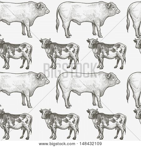 Cows and bulls. Seamless vector pattern with animals. Black and white illustration.