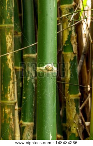 The Green bamboo beautiful in nature, outdoor