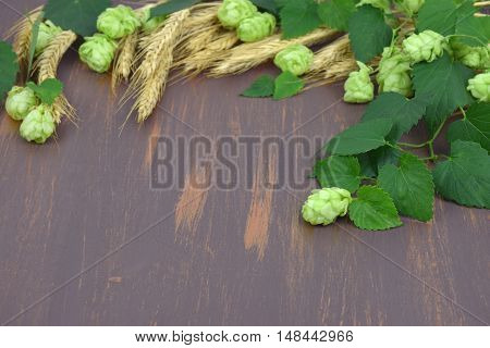 Fresh hop cones leaves and ears of corn on the wooden background. Close-up. Autumn. Brewing. Ingredients. Natural Medicine.