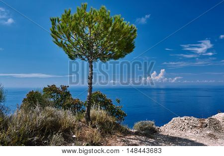 Lonely stone pine on the shores of the Ionian Sea island of Lefkada
