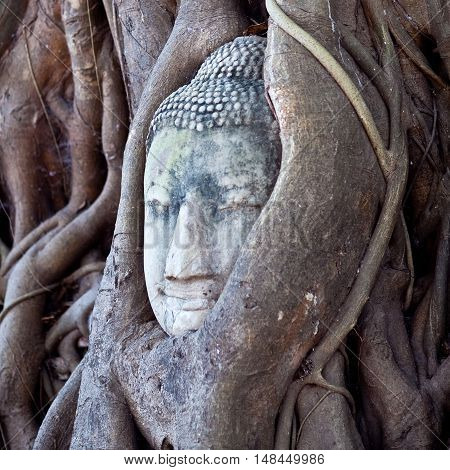 Ancient Buddha's Head In Tree Roots In Ayutthaya, Thailand