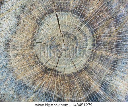 Tree Stump Background for wallpaper or art.