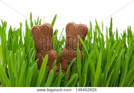 chocolate bunny in green grass on a white background
