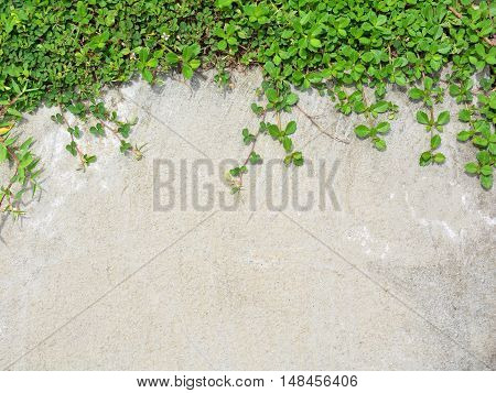 The blend between nature and buildings. Green grass with white cement wall.