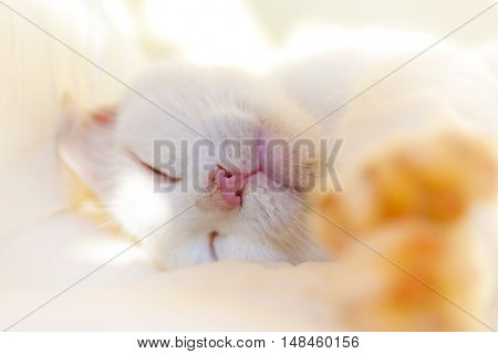 White cat takes a nap on the bed in sunny day. Shallow DOF.