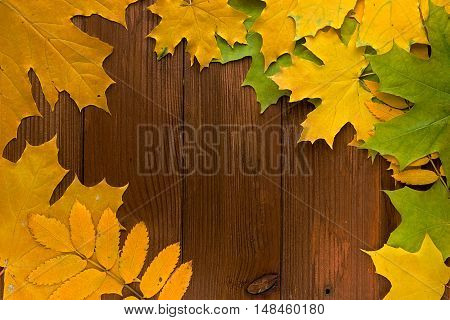 Autumn leaves over old brown wooden background with empty space