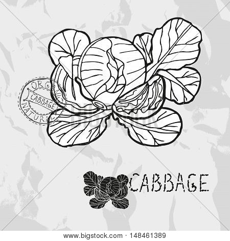 Hand Drawn Cabbage