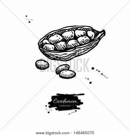 Cardamom seed vector hand drawn illustration. Isolated spice object. Engraved style seasoning. Detailed organic product sketch. Cooking flavor ingredient. Great for label, sign, icon