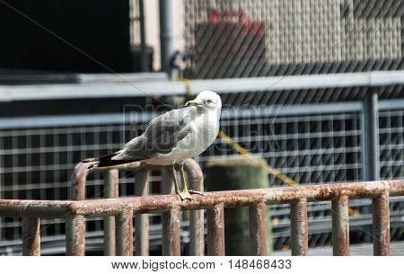 Gull perched on iron railings at port facilities