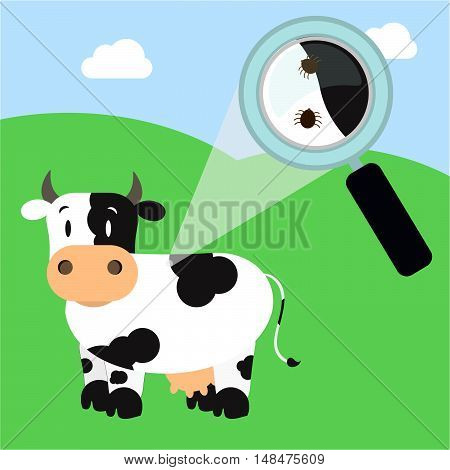 Tick In The Cow