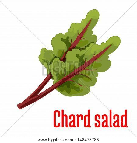 Chard salad plant icon. Isolated leafy vegetable green element. Vegetarian leaf salad product sign for sticker, grocery shop, farm store
