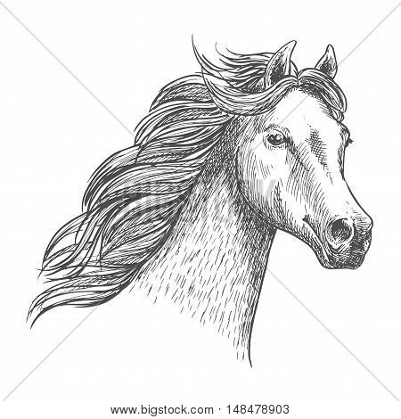 White graceful horse sketch portrait. Wild mustang with mane waving by wind, looking in far