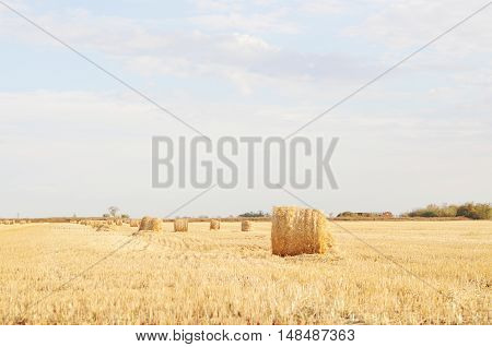 Hayfield landscape with stack of hays on sunny day
