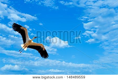Beautiful tropical bird in flight against blue sky panoramic image