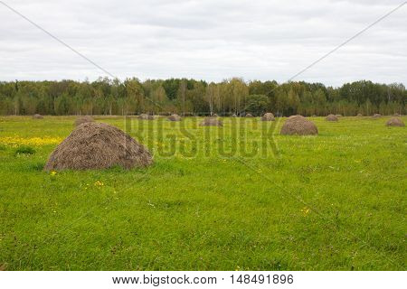Green field with hay groups. Mop, agricultural for animal feed, Ukraine countryside view