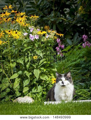 Cat next to flowers. A cute cat in the grass by the flower garden.