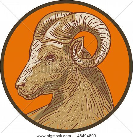 Drawing sketch style illustration of a ram goat head viewed from the side set inside circle.