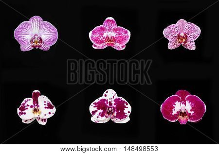Set of orchids-black background
