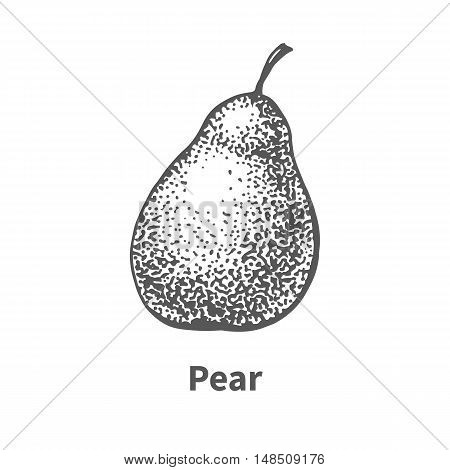 Vector illustration doodle black and white hand-drawn pear. Isolated on white background. The concept of harvesting. Vintage style. Fruit with the inscription.
