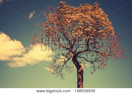 Bright Tree With Sky And Clouds, Toned