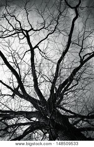 Bare Tree Over Dark Cloudy Sky