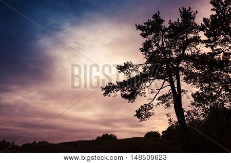 Silhouette Of Pine Tree In Night Fores