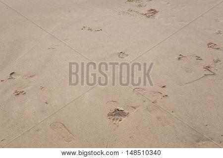 footprint on sand beach, natural texture background