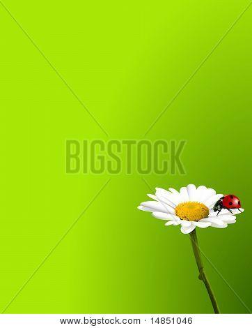 Ladybug On Chamomile Background