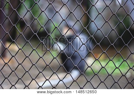 blur animal in the cage black bear in jail