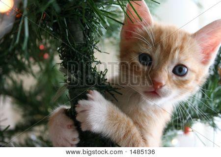 Ginger Kitten Up A Christmas Tree
