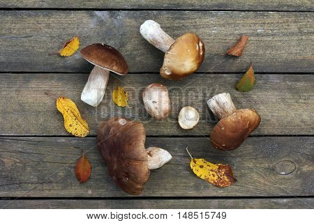 flat layout of edible mushrooms on a wooden background top view / harvest from the forest